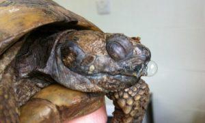 Hibernacion de las tortugas