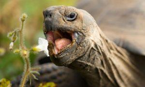 dientes de las tortugas