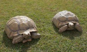 Tortugas de Tierra foto