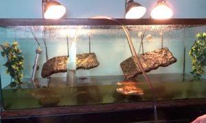 Lámparas para tortugas